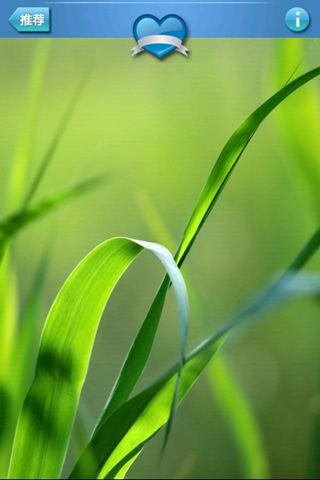 高清绿色养眼壁纸